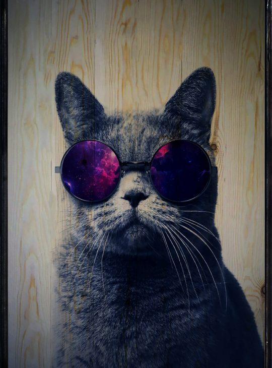 Cool Cat Ahşap Tablo