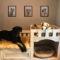 Dog Üçlü Set Ahşap Tablo